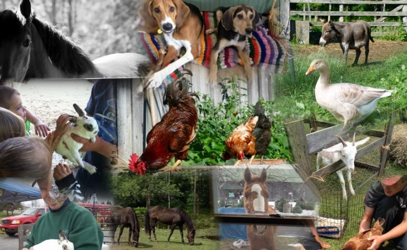 Many animals call Breezy Maples Farm home!
